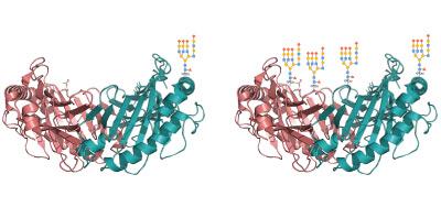salivaprotein1